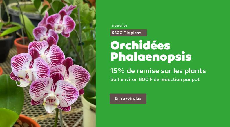 Environ 800F de remise sur chaque pot d'orchidées. Offre valable uniquement au magasin TBA à Fare Ute.